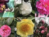 somos Jardín Excelencia Internacional!! Pazo Saleta Garden Excellence!