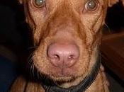 Arwen, encantadora cachorra Arca Córdoba.