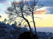 Árboles tarde sábado invernal: #RetoArbol