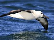Barcos albatros