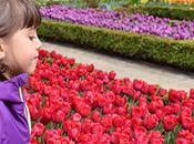 Planazo: Cientos Tulipanes Real Jardín Botánico Madrid