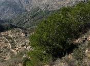 minería hierro Sierra Orihuela. Minería metálica Alicante.