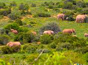 Parque Nacional Elefantes Addo: paraíso protegido Sudáfrica