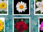 ¿Qué flor coincide mejor personalidad?