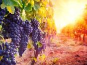 Utiel-Requena: 2500 años tradición vitivinícola