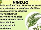 Beneficios semillas Hinojo