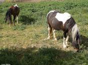 Significado soñar caballos