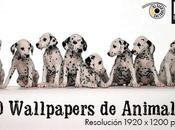 Wallpapers Animales