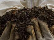prohíbe tres insecticidas dañinos para abejas cultivos aire libre