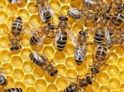 insecticidas neonicotinoides riesgo para abejas, según EFSA