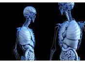Paso Desarrollo Órganos Humanos Laboratorio