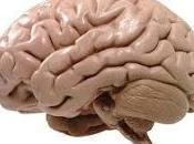 Descubren Nueva Enfermedad Neurodesarrollo Heredada