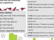 feria adopción auditorio parque calero (Madrid). Mayo.