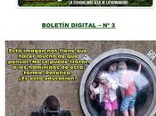 Boletin digital proyecto gran simio