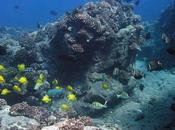 Importancia modelos predicción restauración poblaciones peces arrecifes Hawai.