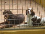 "perrera paraiso"". estos perros difunde nadie. adoptan serán sacrificados."