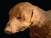 Ocho millones perros momificados encontrados egipto