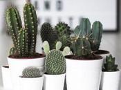 Decorar plantas: plantas todoterreno