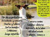 festival adopción educación animal Leganés. Junio.