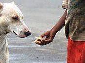 Sobre bondad