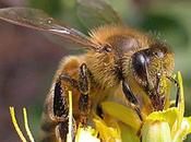 Simposio internacional apicultura llevará cabo...