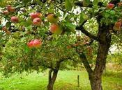 Árbol Manzano Caracteristicas
