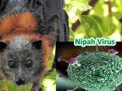 Tres nuevas preocupaciones virológicas: Nipah, polio gripe