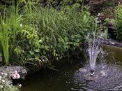 fuente peces.
