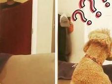 What Fluff Challenge: fenómeno viral odiado perros gatos