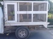 Ayuntamiento busca perros capturados encuentren hogar