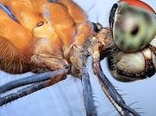 mosca pared: científicos comparan visión especies.