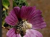 Catálogo regional especies vegetales amenazadas Extremadura. Libro