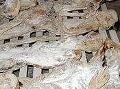 1994 2011, 17años matanza