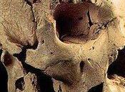 ¿Cómo determina edad fósiles?