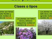 Tipos Plantas