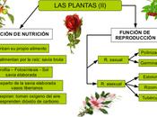 Funciones Plantas