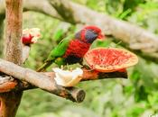 hora comida pájaro