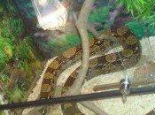 Comentario llega frío! Reptiles temperatura ideal para reptiles invierno. Mascotia