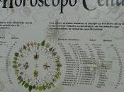 Horóscopo Celta