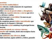 Características Animales