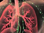 Cada cerca crear pulmones para trasplantes humanos