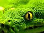 Soñar serpientes,culebras víboras..Conoce significado real sueños serpientes.
