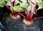 plantas ideales para macetohuerto!!