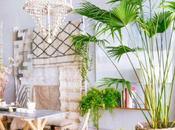 Decorar plantas: Cómo cuidar palmeras dentro casa