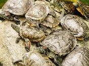 Formación tortuga