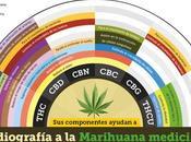 """guerra contra drogas"" Estados Unidos"