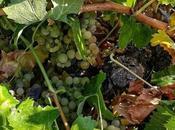 Visita Bodega Javier Sanz Viticultor
