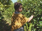 Lovely Shawl Mimosa Yarnitas