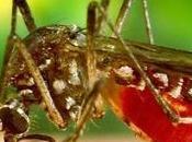 confirman casos dengue contraídos España