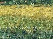 estudio Rayos revela amarillos Gogh viran marrón.